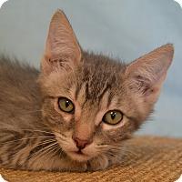 Adopt A Pet :: Smokie - Larned, KS