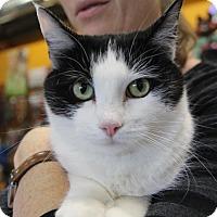 Adopt A Pet :: Stardust - Littleton, CO