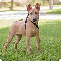 Adopt A Pet :: LADY GIRL - Vero Beach, FL