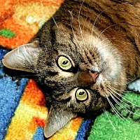 Adopt A Pet :: Abigail - Port Angeles, WA