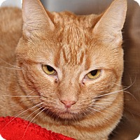 Adopt A Pet :: Cyrus (Neutered) - Marietta, OH