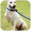 Photo 2 - Basenji/Shiba Inu Mix Dog for adoption in los Angeles, California - Snow