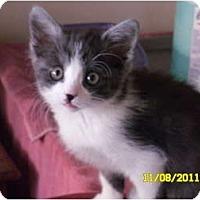 Adopt A Pet :: Hailey - lake elsinore, CA