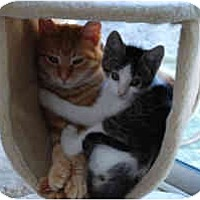 Adopt A Pet :: Chelsea - Davis, CA