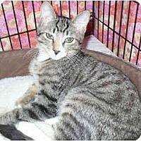 Adopt A Pet :: Burt - Colmar, PA