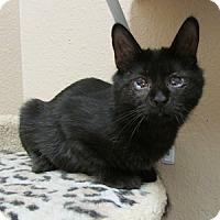 Adopt A Pet :: Super - Gilbert, AZ