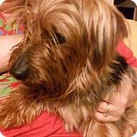 Adopt A Pet :: Hershel - Lorain, OH