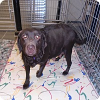 Adopt A Pet :: URGENT DOLLY - Cornwall, ON