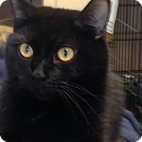 Adopt A Pet :: Yuffie - Renfrew, PA
