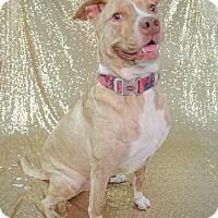 Adopt A Pet :: Nugget - Muskegon, MI