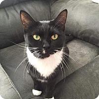 Adopt A Pet :: Padme - Columbus, OH