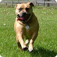 Adopt A Pet :: Aurora - Dayton, OH