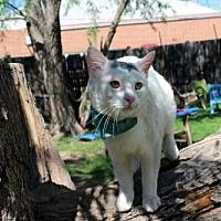 Adopt A Pet :: Taco Aztec - Denver, CO