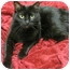 Photo 2 - Domestic Shorthair Cat for adoption in Mt. Prospect, Illinois - Mystery