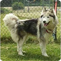 Adopt A Pet :: Lexi - Belleville, MI