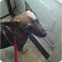 Adopt A Pet :: Smokie - Murfreesboro, TN