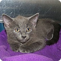 Adopt A Pet :: Buster - Dover, OH