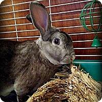 Adopt A Pet :: Grady - Williston, FL