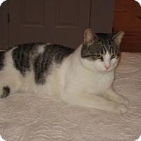 Adopt A Pet :: Sebastian - bloomfield, NJ