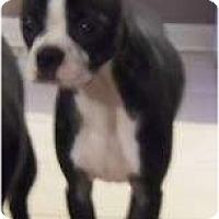 Adopt A Pet :: Snarkie - Glastonbury, CT