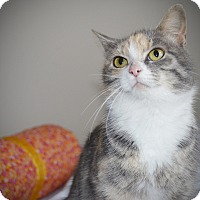 Adopt A Pet :: Mittens - Xenia, OH