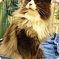 Adopt A Pet :: Nala - N. Billerica, MA