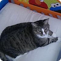 Adopt A Pet :: Molly (no adoption fee) - Witter, AR
