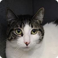 Adopt A Pet :: Neo - Sarasota, FL