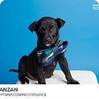 Adopt A Pet :: Evanzan - Ogden, UT