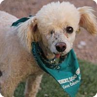 Adopt A Pet :: Leibel - Phoenix, AZ