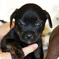 Adopt A Pet :: Reece - Marion, NC