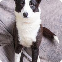 Adopt A Pet :: SATURN - Anna, IL