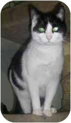 Domestic Shorthair Cat for adoption in Strathmore, Alberta - Fern