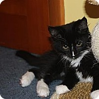 Adopt A Pet :: Bethany (LE) - Little Falls, NJ