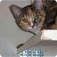 Adopt A Pet :: Frenchie - Secaucus, NJ