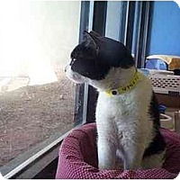 Adopt A Pet :: Jedi - Scottsdale, AZ