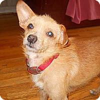 Adopt A Pet :: Terry - Charlotte, NC