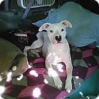Adopt A Pet :: KC, she is so special!!!!! - Sacramento, CA