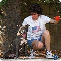 Adopt A Pet :: SACHI - Phoenix, AZ