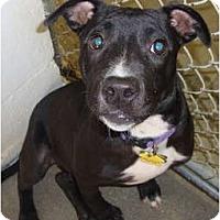 Adopt A Pet :: Sweetie - Winter Haven, FL
