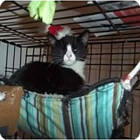 Adopt A Pet :: CHELLY - Little Neck, NY