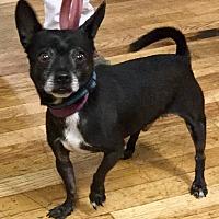 Adopt A Pet :: Bubba - Phoenix, AZ