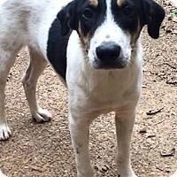 Adopt A Pet :: Chip - Columbia, TN