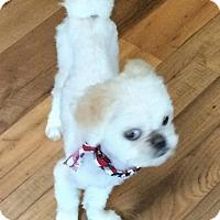 Adopt A Pet :: Bumble - Homer Glen, IL