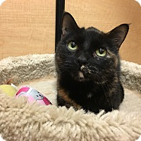 Adopt A Pet :: Mindy - Foothill Ranch, CA