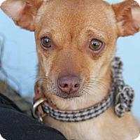 Adopt A Pet :: Lou - Yuba City, CA
