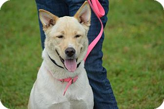 Shepherd (Unknown Type) Mix Dog for adoption in Cleveland, Texas - Sierra