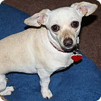 Adopt A Pet :: Cookie - 8.8 lbs! - Bellflower, CA