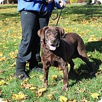 Adopt A Pet :: Tammy - Shrewsbury, NJ