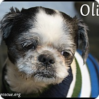 Adopt A Pet :: Oliver - Rockwall, TX